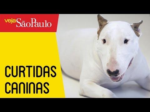Curtidas Caninas