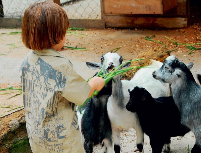Minifazenda com vários animais de criação, como cabras.