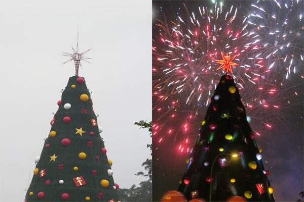 A árvore em 2013: 50 metros de altura