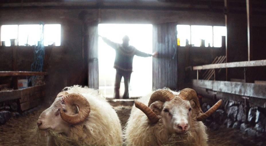 A Ovelha Negra: longa da Islândia foi vencedor da mostra Um Certo Olhar do Festival de Cannes