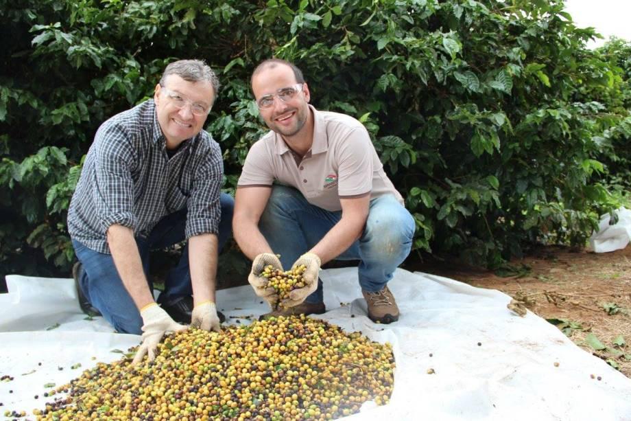Da semente à xícara: fazenda do Octavio Café fica em Pedregulho