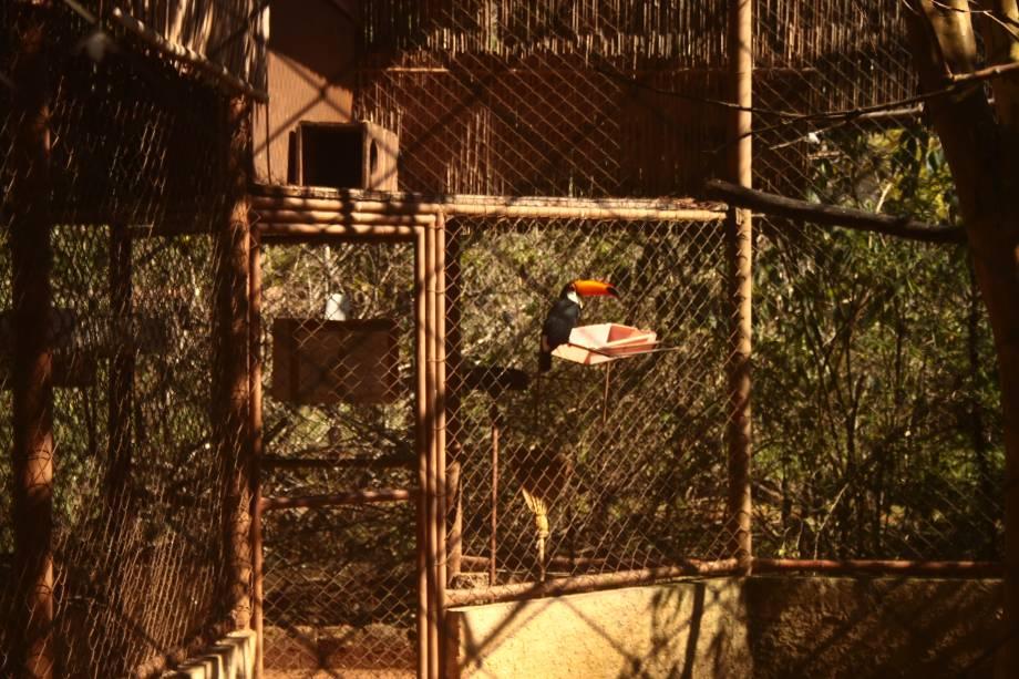 Parque Zoológico Eugênio Walter: o tucano-toco chama a atenção da garotada