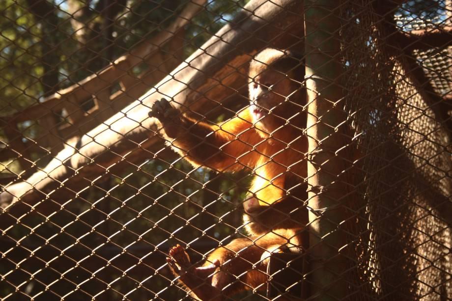 Parque Zoológico Eugênio Walter: o macaco-prego Chico é a estrela do local