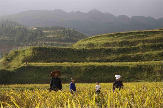 A Menina dos Campos de Arroz: Qiu mora em uma pequena cidade no sul da China, cercada por campos de arroz