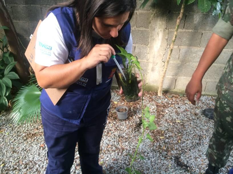 Funcionária retira amostra da larva de planta