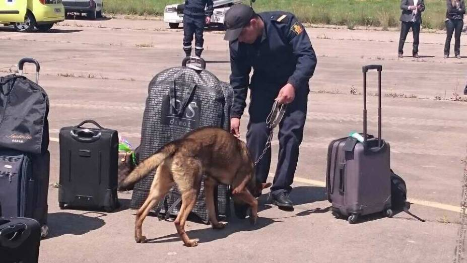 Cães farejam as malas dos passageiros no Marrocos