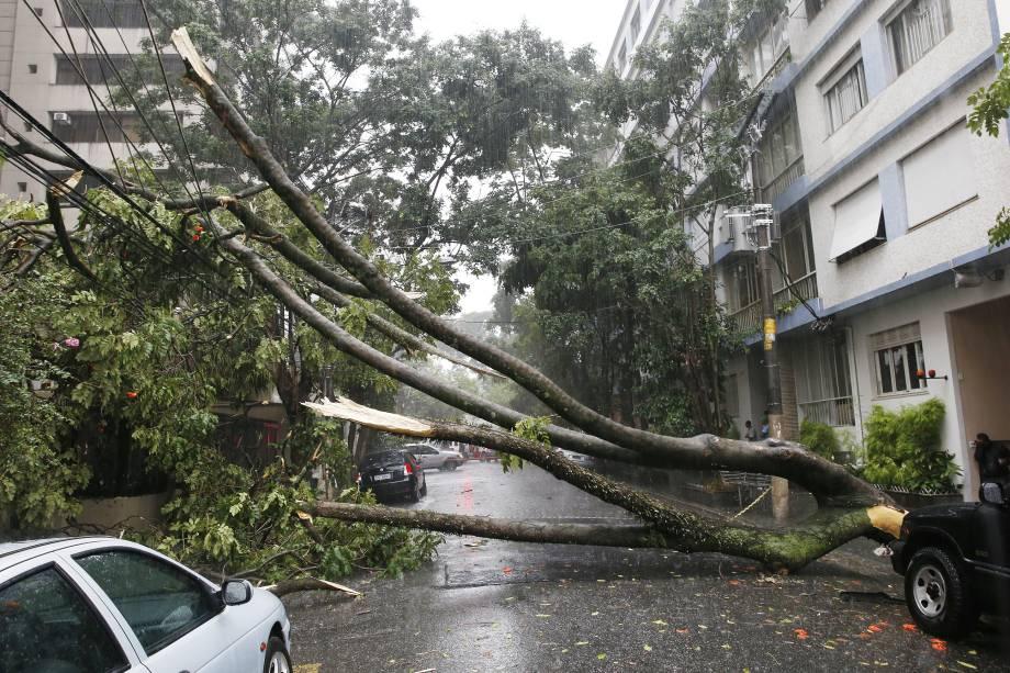 Motorista morreu eletrocutado após queda de árvore na Rua Tupi, em Higienópolis, após árvore derrubar cabo de eletricidade