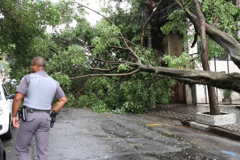 Árvore caída na Rua Almirante Marques de Leão, na Bela Vista, devido às chuvas que atingiram a capital paulista