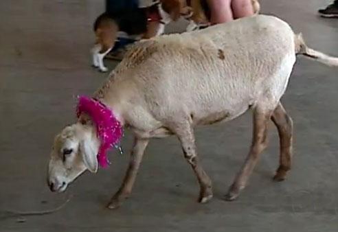 ovelha-madona.jpeg