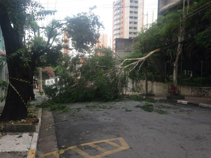 Árvore caiu na Rua Capote Valente com a chuva da última madrugada