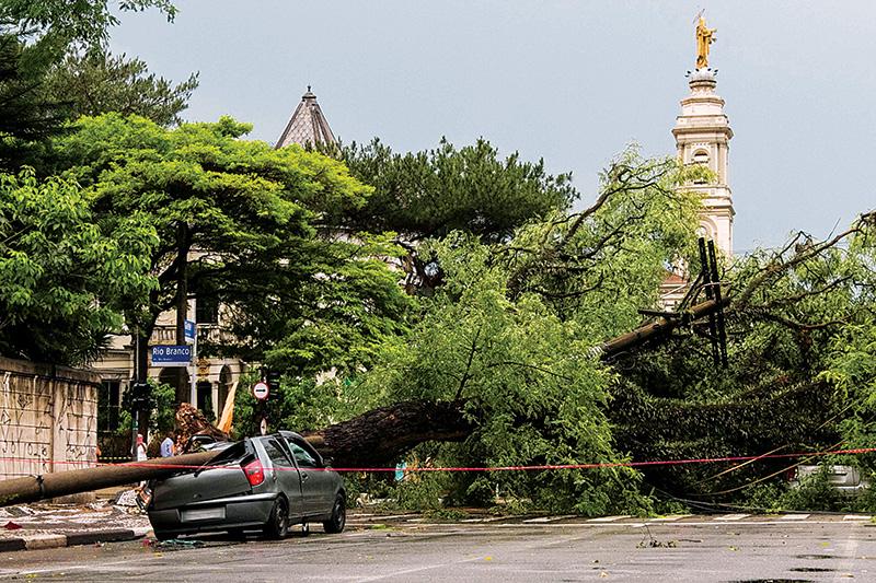 No início deste ano, árvore tombada no centro amassou carro