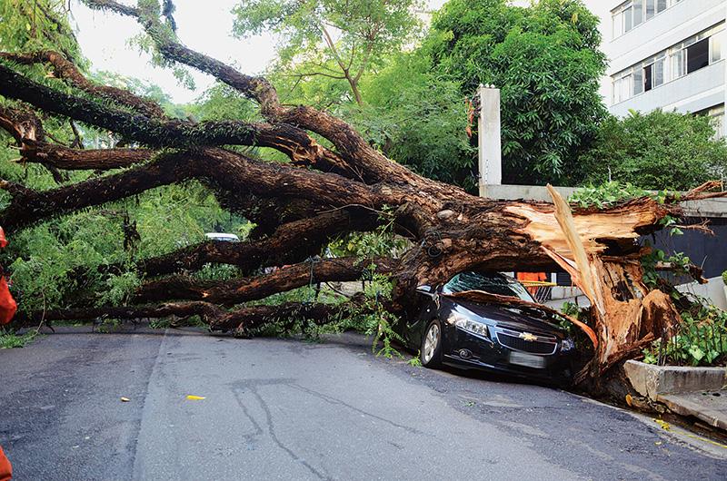 A chuva forte do dia 8 de janeiro fez com que uma árvore caísse sobre um carro estacionado na Alameda Casa Branca, na região dos Jardins