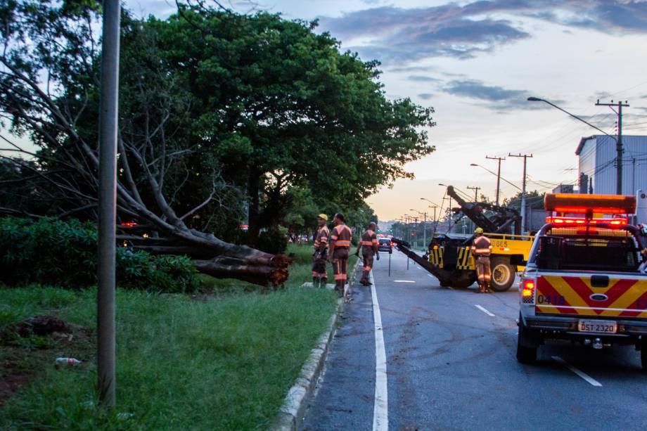 Queda de árvore na Zona Sul de São Paulo: região foi uma das mais prejudicadas na cidade no início do ano