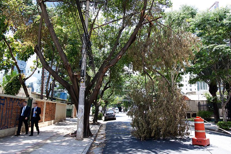 Avenida Horácio Lafer interditada por causa de queda de árvore no dia 8 de janeiro