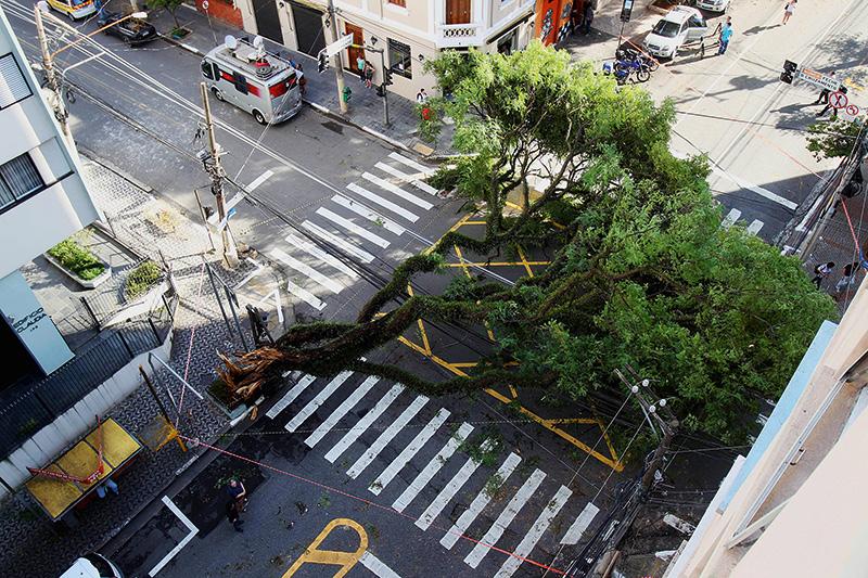 Árvore tombada na esquina das ruas Cubatão e Eça de Queiroz, na Vila Mariana