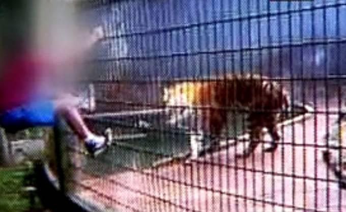 menino-tigre-reproducao.jpeg