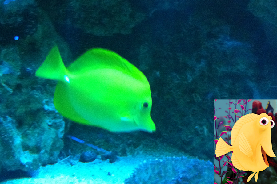 Procurando Nemo: Bubbles foi inspirado no peixe yellow tang