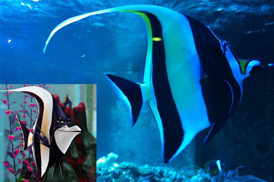 Procurando Nemo: Gil é semelhante ao peixe zanclus