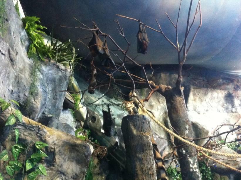 Morcegos não são tão malvados como parecem: eles comem apenas frutas