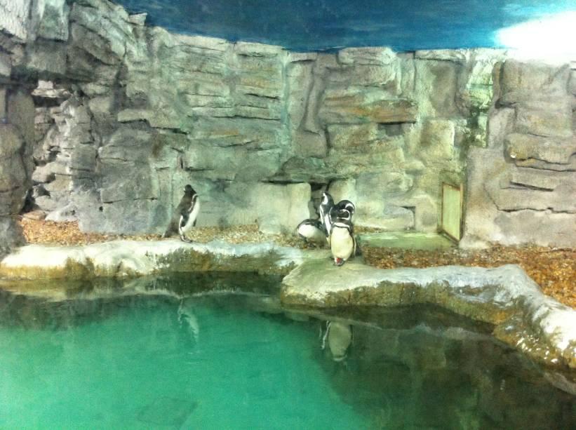 Pinguins argentinos foram até a Bahia, em busca de alimento