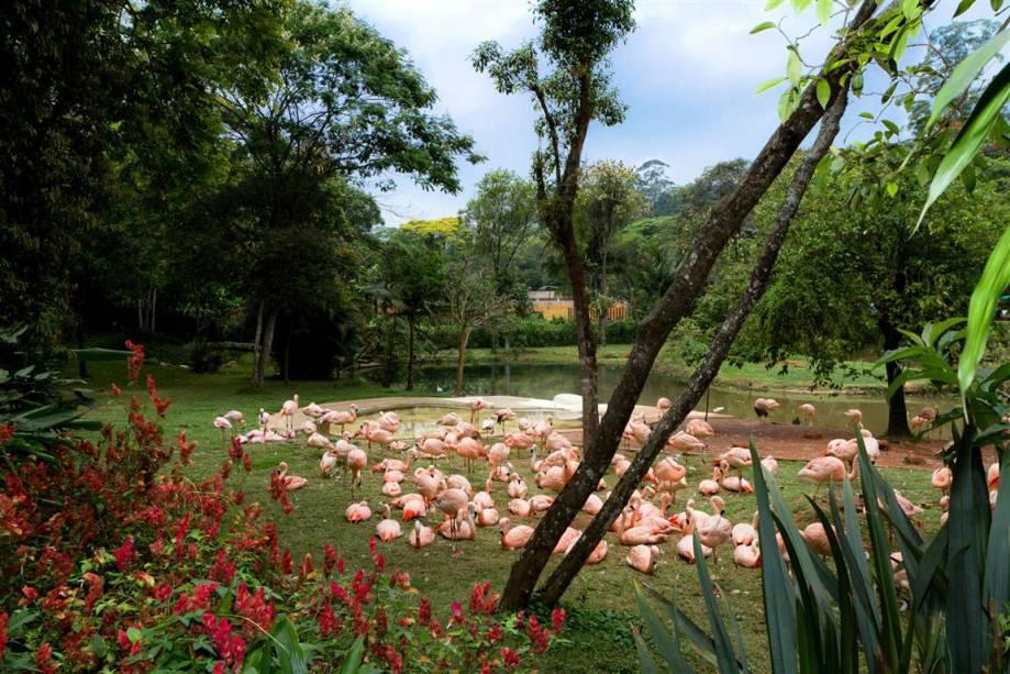 Flamingo: existem cinco espécies do animal no mundo. No Brasil, há apenas o flamingo-chileno (como na imagem).