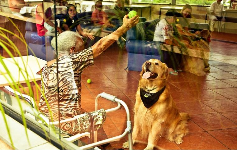 O golden retriever Jorge em visita a Morada São João, um abrigo para idosos no centro