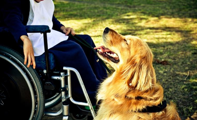 A golden retriever Lisa ao lado de paciente com paralisia cerebral na Fraternidade Irmã Clara, na Barra Funda