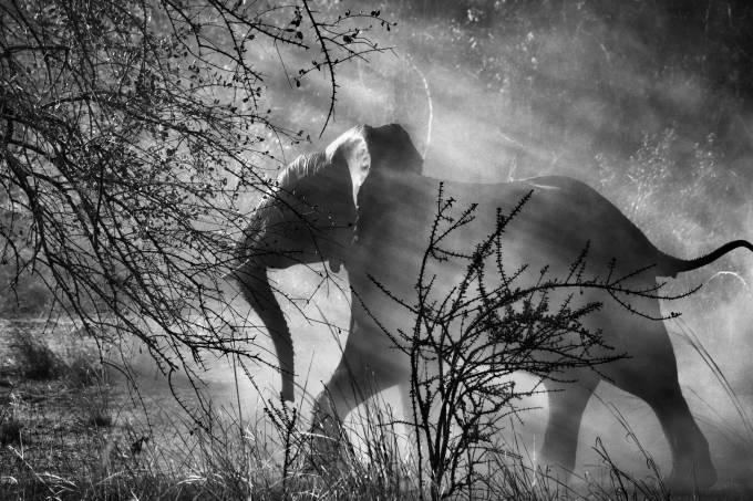 sebastiao-salgado-fotografia-elefante.jpeg
