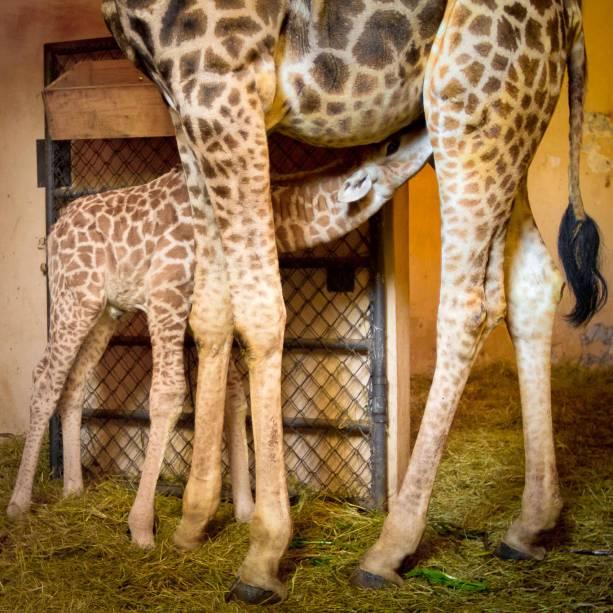 Esse é o segundo filhote do casal Mel e Palito