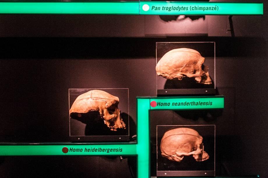 O acervo da exposição foi cedido pelo Laboratório de Estudos Evolutivos Humanos da USP, um dos maiores da América Latina