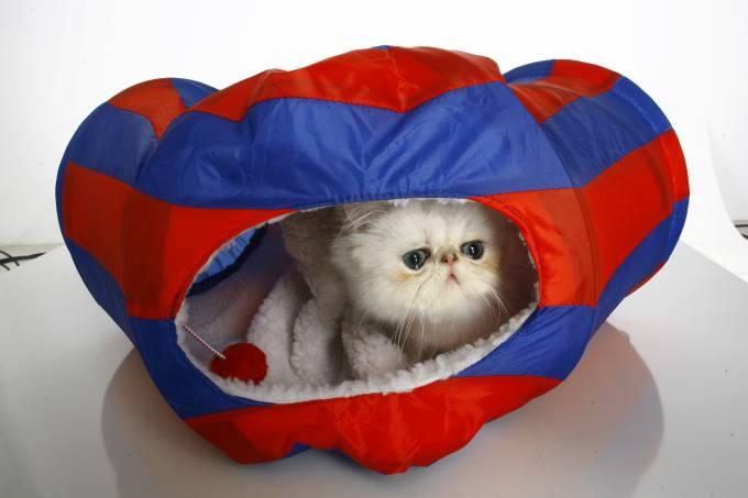 gato-carlos-cubi.jpeg