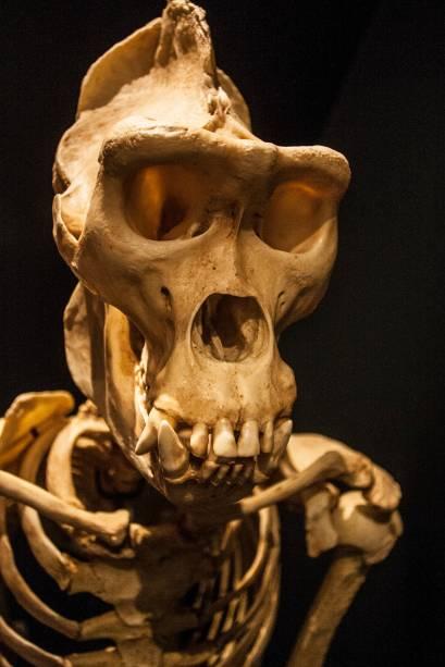 A ideia da exposição é realçar os avanços dos estudos sobre o processo de hominização