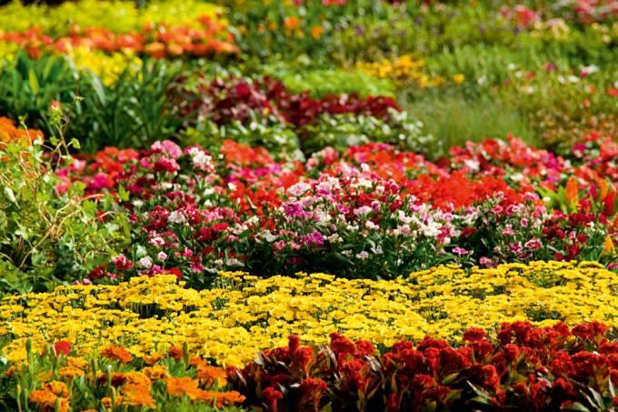 flores-vendidas-no-pavilhao-mercado-livre-de-produtos-na-ceagesp-ilustrando-a_-42693211-jpg.jpeg