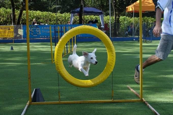 Cão Bala Agility – academia para cães