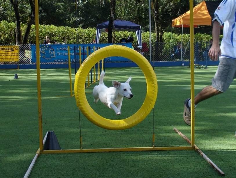 Na Cão Bala Agility os cãezinhos de exercitam em meio a 20 obstáculos