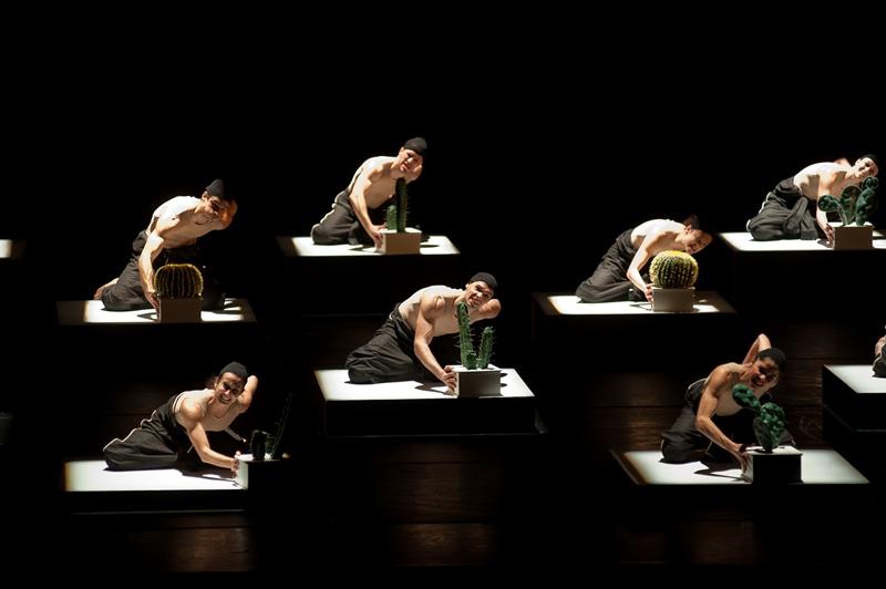 Cacti: coreografia do Balé da Cidade