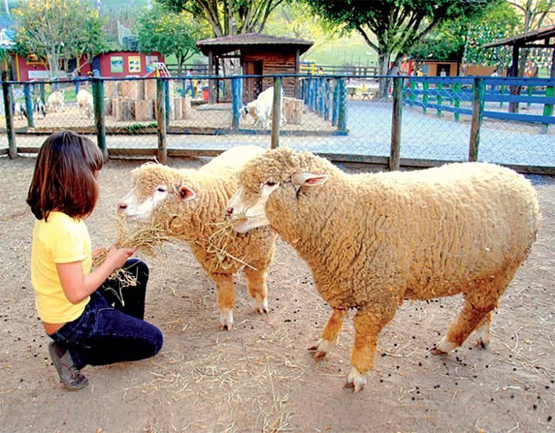 De perto: crianças alimentam ovelhas e outros animais