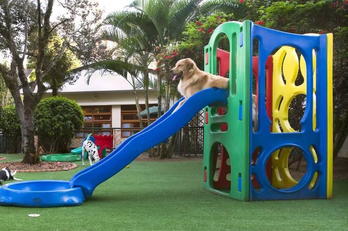 Dogwalker – creche para pets