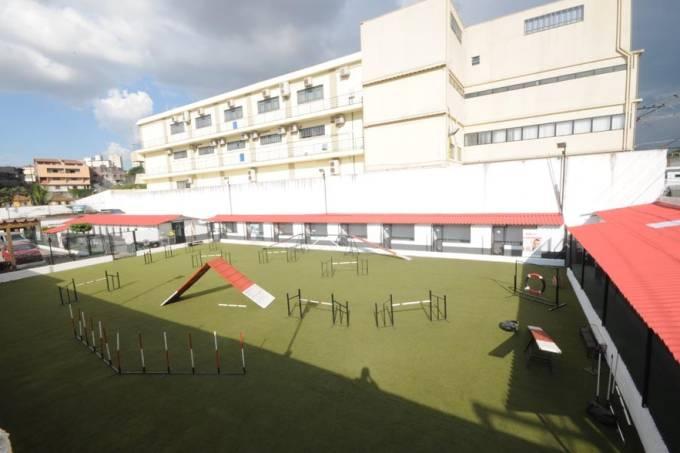 Escola Paulista de Obediência Canina e Agility (EPOCA)