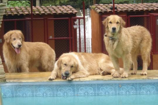 House Dog: donos podem acompanhar ao vivo, pela internet, o que seus pets aprontam na chácara