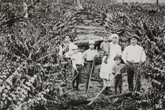 Imigrantes japoneses trabalhando em plantação de café no início do século 20