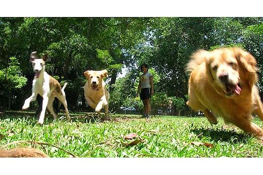 Dogwalker: passeios recreativos e educativos personalizados para os cães Foto 2