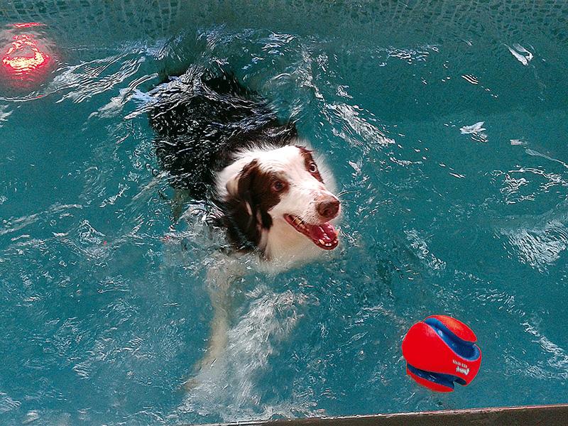 Dog School: banho de piscina (Foto: Divulgação)