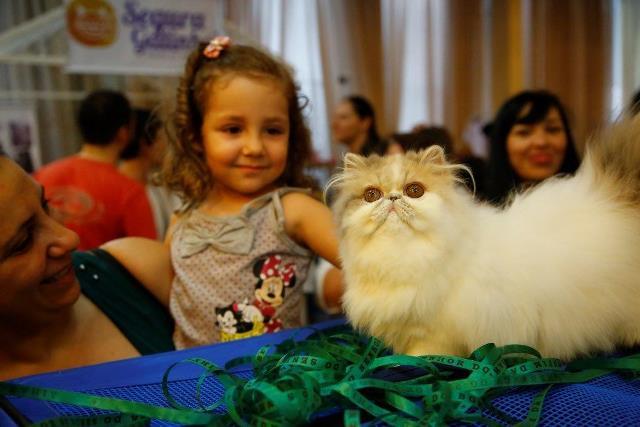 Exposição de Gatos