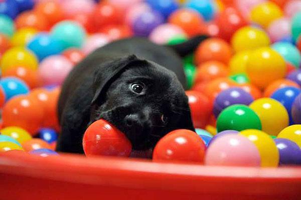 cachorro piscina de bolinhas