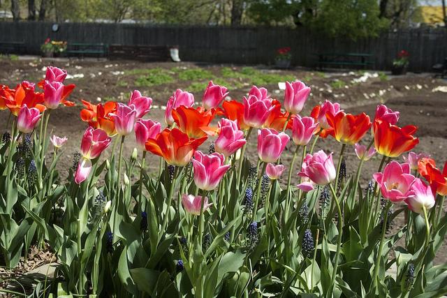 Um dos jardins mais bonitos da cidade (Foto: Julian Dunn, no Flickr)