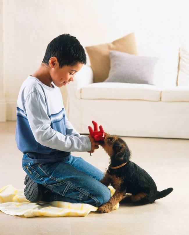 Convivendo com o melhor amigo: risco de alergias
