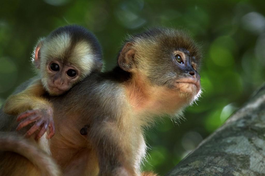 Amazônia é uma boa opção para a criançada