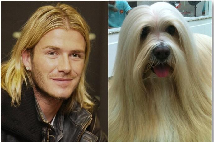Beckham x Meg