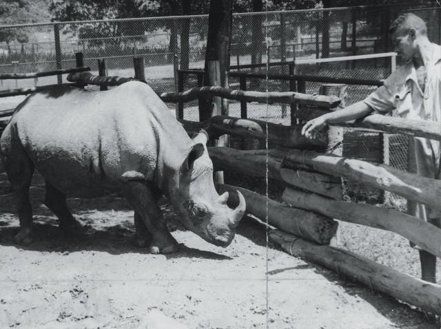 Cacareco no zoológico (Foto: Arquivo/ Estadão Conteúdo)